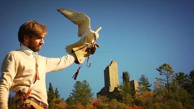 corsi di falconeria e avvicinamento al mondo dei rapaci